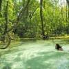 1º de março: Dia do Turismo Ecológico