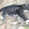 Animais são encontrados mortos por envenenamento no Sorirama