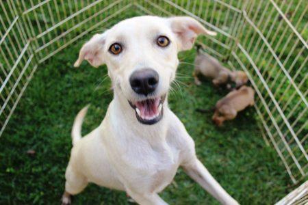 'Todo cão merece uma casa', faz referência à icônica casinha do Snoopy