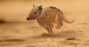 Mamífero vertebrado que habitou a região de São Carlos e Araraquara durante o período Cretáceo brasileiro, há cerca de 140 milhões de anos.
