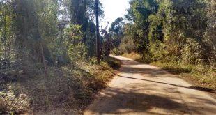 Área rural onde foram encontrados 3 macacos contaminados com febre amarela
