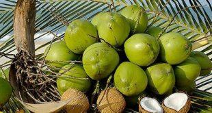 casca-coco